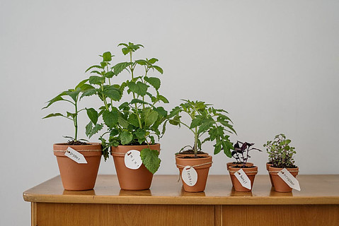 gardening for beginners photo of potted plants