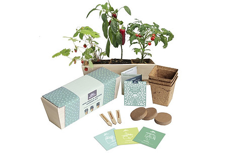 how to indoor garden - photo of mini garden