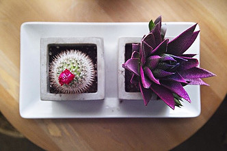 10 Succulent Subscriptions That Bring Joy to Your Space