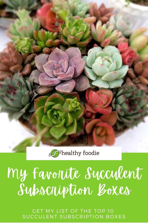 10 succulent subscriptions