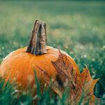 pumpkin good for you